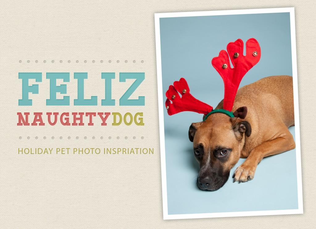 Holiday-Pet-Photo-Inspiration