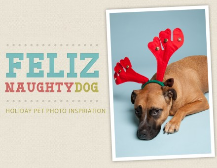 Holiday-Pet-Photo-Inspiration