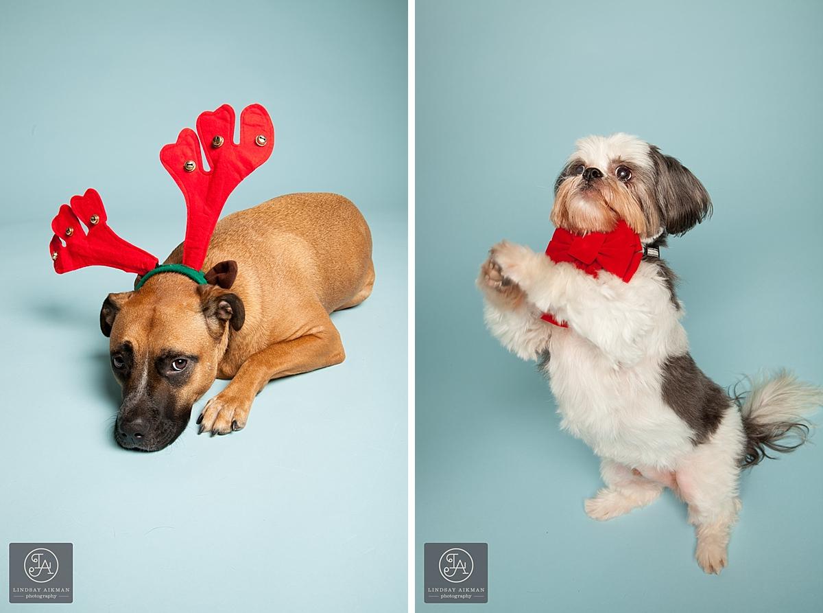 Raleigh Holiday Pet Photos-001