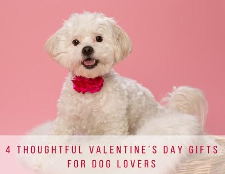 Valentine's Day Pet Portraits Raleigh-1