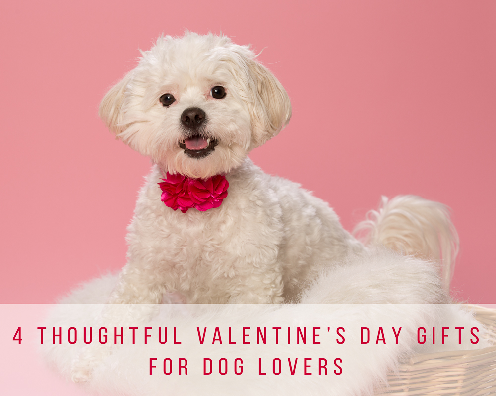 4 Thoughtful Valentine S Day Gifts For Dog Lovers