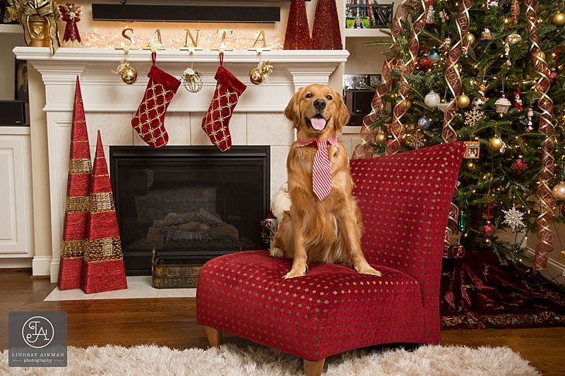Raleigh Christmas Pet Photos
