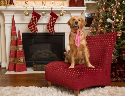 Raleigh Christmas Pet Photos_005