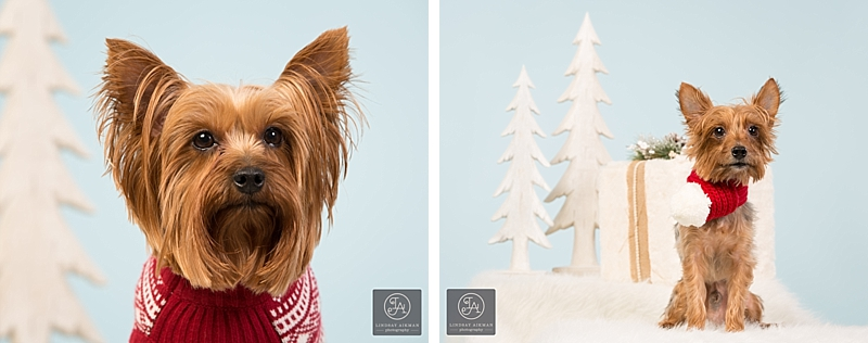 Raleigh Christmas Pet Photographer
