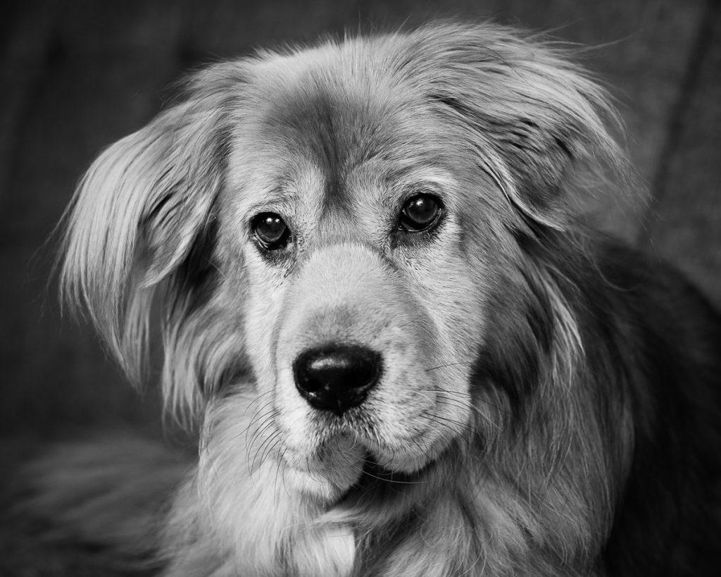 Cary Pet Photographer