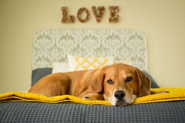 Raleigh-Pet-Photographer_002A