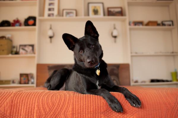 Raleigh-Pet-Photographer_003