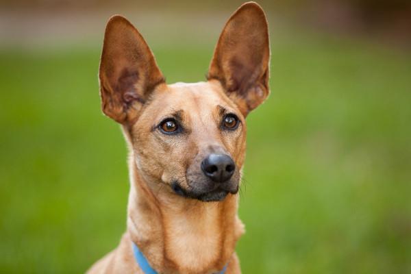 Raleigh-Pet-Photographer_004A