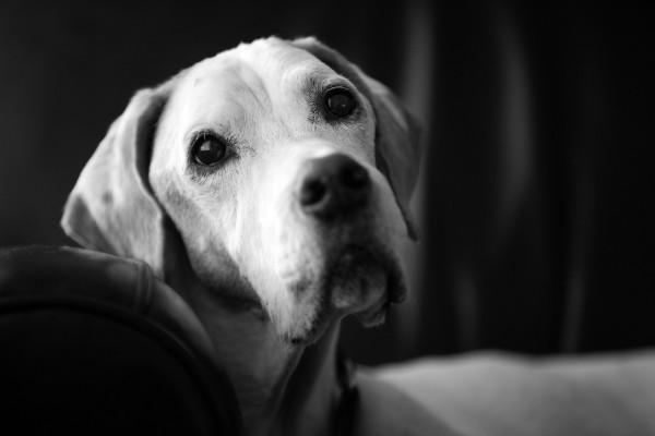 Raleigh-Pet-Photographer_005