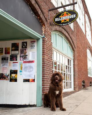 Raleigh-Pet-Photographer_009