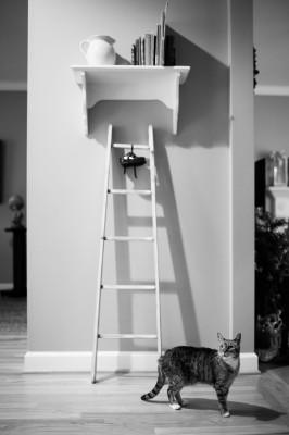 Raleigh-Pet-Photographer_010