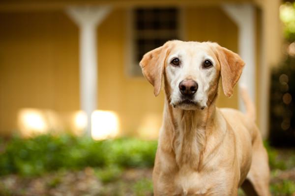Raleigh-Pet-Photographer_013