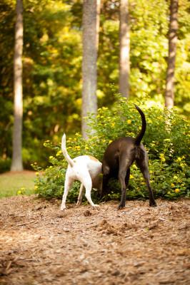 Raleigh-Pet-Photographer_014