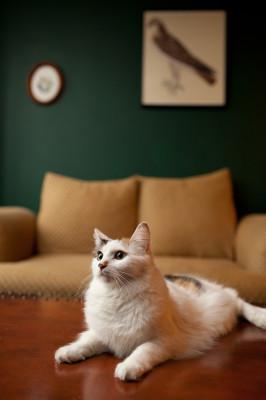 Raleigh-Pet-Photographer_016