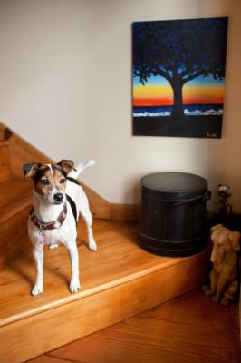 Raleigh-Pet-Photographer_020