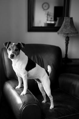 Raleigh-Pet-Photographer_021