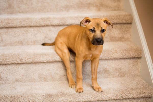 Raleigh-Pet-Photographer_021C