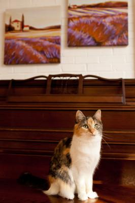 Raleigh-Pet-Photographer_040