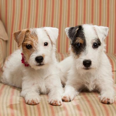 Raleigh-Pet-Photographer_054
