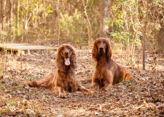 Raleigh-Pet-Photographer_055