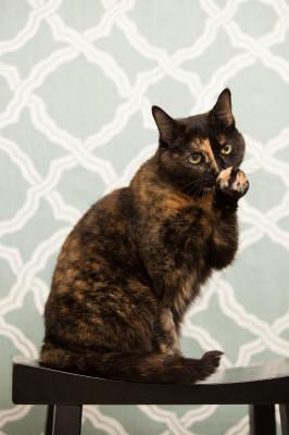 Raleigh-Pet-Photographer_058