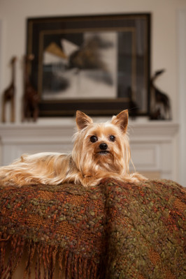 Raleigh-Pet-Photographer_062