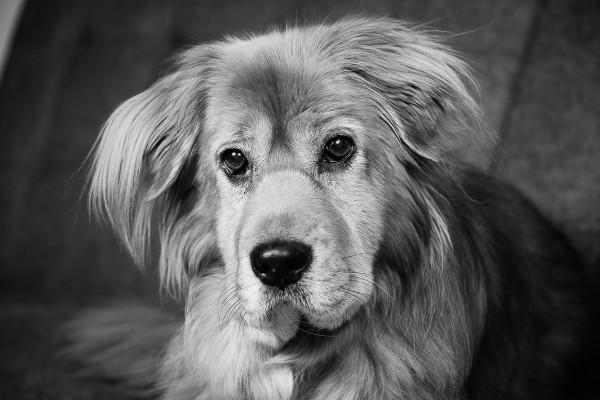 Raleigh-Pet-Photographer_002E