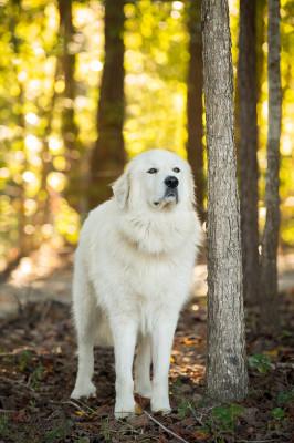 Raleigh Pet Photographer_003