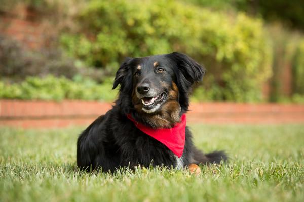 Raleigh-Pet-Photographer_004C