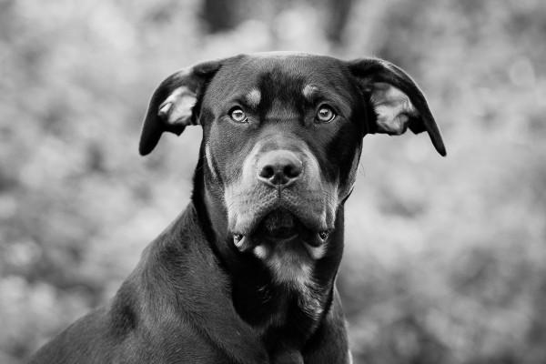 Raleigh Pet Photographer_005