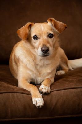 Raleigh-Pet-Photographer_031C