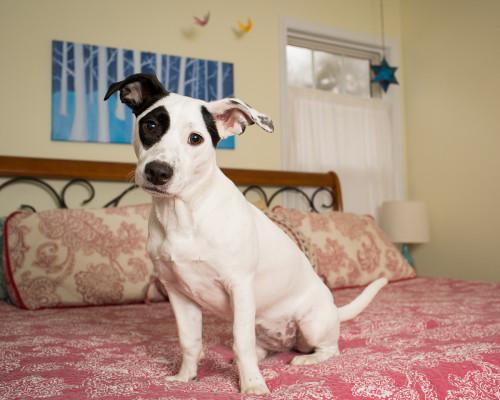 Raleigh-Pet-Photographer_046A