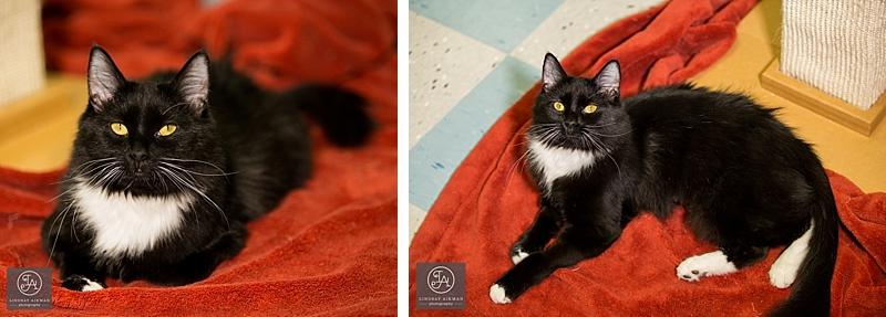 Raleigh Pet Adoption Photos