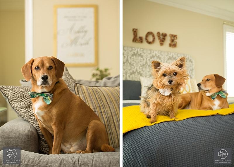 Apex Pet Photographer