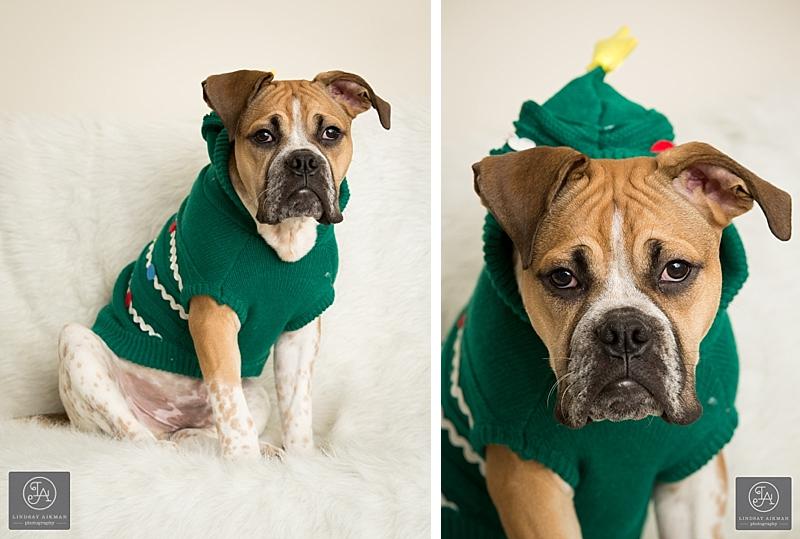 Raleigh Christmas Pet Photographer