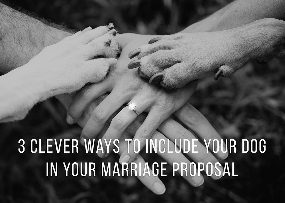 Include Dog in Marriage Proposal